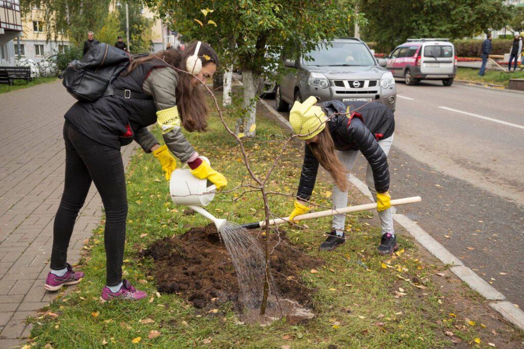 Высадка яблони в аллее г. Ижевск